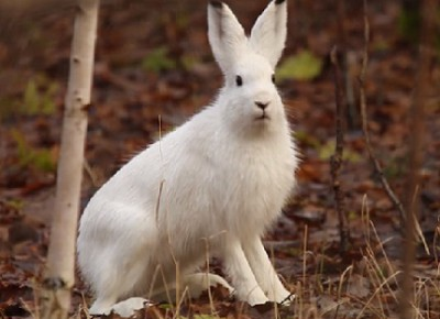 Про зайцев