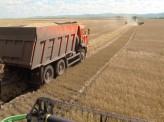 Первый миллион зерна засыпали в закрома хозяйства Красноярского края