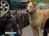 В Красноярске определили подрядчика, который за 9 млн рублей займётся отловом бродячих собак