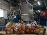 Картофель, выращенный в Красноярском крае, готов вытеснить с прилавков весь импорт