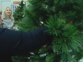 Красноярские эксперты проверили качество искусственных ёлок