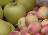 В Красноярском крае неурожай яблок